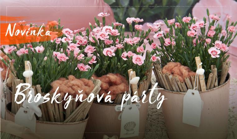 broskynova party